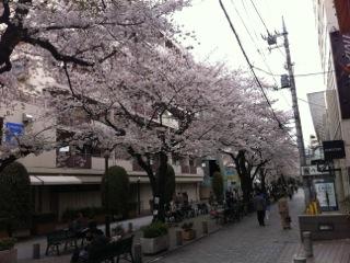 自由が丘(桜) 020